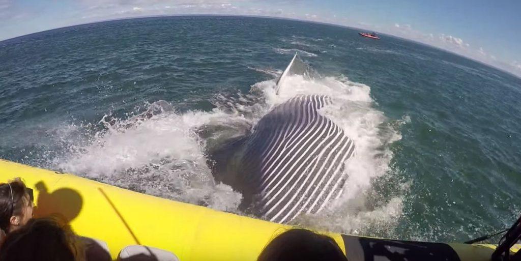 Baleine à St-Laurent