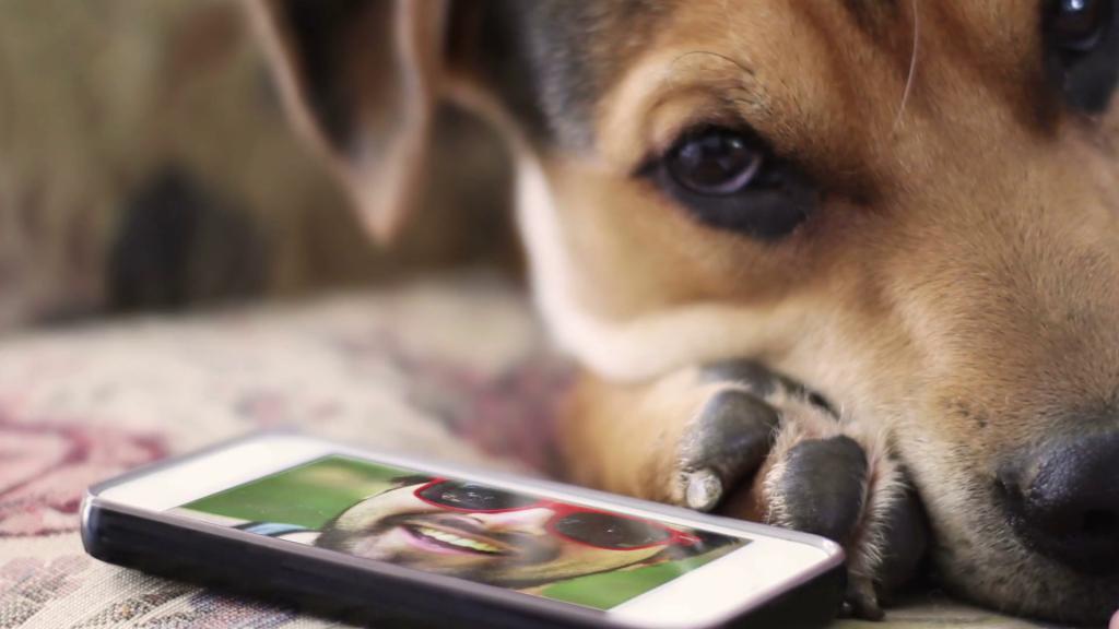 chien et smartphone