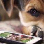 Comment nourrir son chien avec son smartphone ?